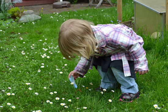 Trying to pin a clothespin on a daisy.