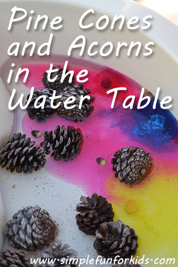 Pine Cones and Acorns in the Water Table