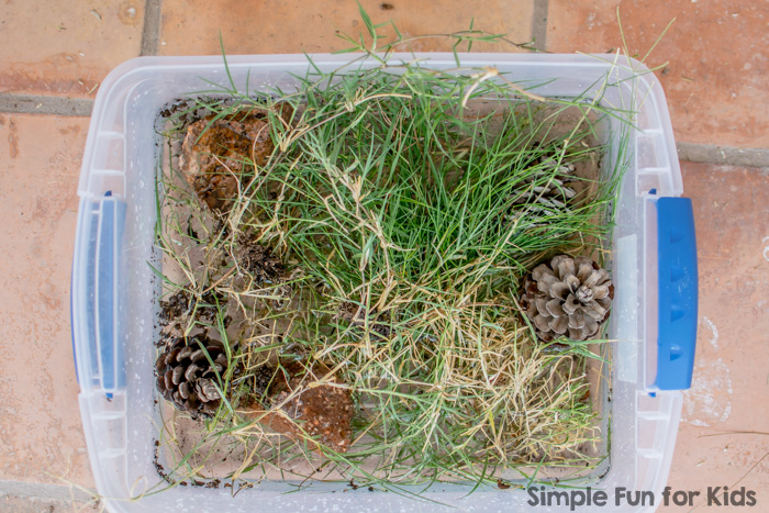 Alphabet Sensory Activities Series: G is for Garden Sensory Bin - exploring natural items from our backyard!