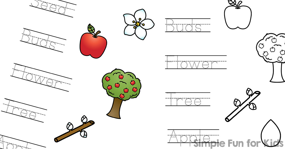 photo relating to Apple Life Cycle Printable identified as Apple Everyday living Cycle Browse, Hint, and Talk Worksheet Working day 2