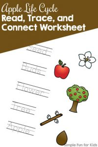 Use this Apple Life Cycle Read, Trace, and Connect Worksheet to practice reading and writing apple life cycle-related words with your kindergartener! No prep required, print and use.