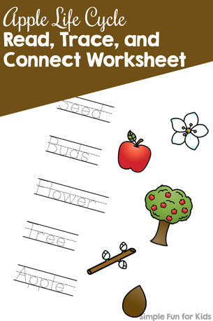 Apple Life Cycle Read, Trace, and Connect Worksheet {Day 2 of Apple Printables}