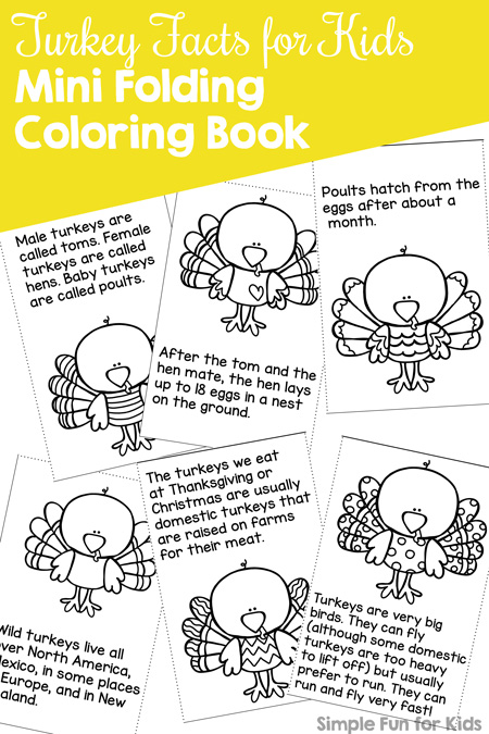 Learn And Have Fun With This Cute Turkey Facts For Kids Mini Folding Coloring Book