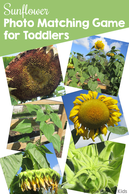 Play a simple matching game with your toddler or preschooler: this Sunflower Photo Matching Game doubles as a great conversation starter about different features of sunflowers and is a part of the 7 Days of Sunflower Printables for Kids series (day 2).